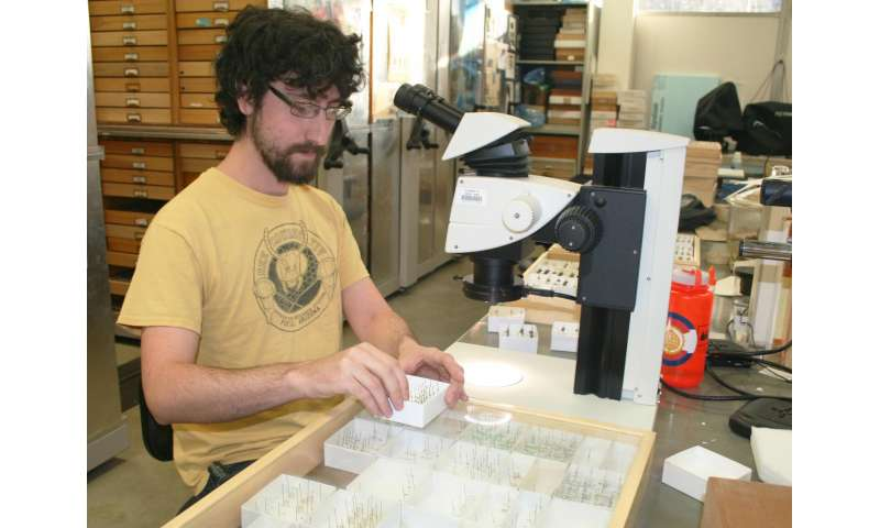 Utah State University entomologist Zach Portman examines desert bee species in his lab.