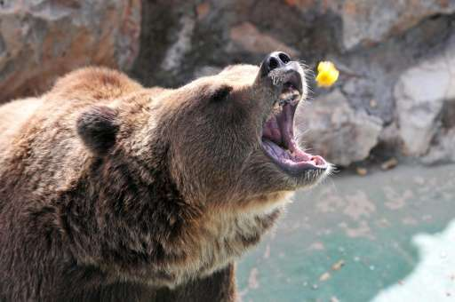 A brown bear receives food from a tourist at the Safari park in Fasano, Italy on August 4, 2011