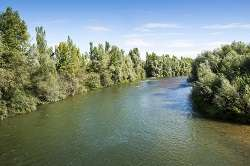 Accurately assessing global river-floodplain forest strategies