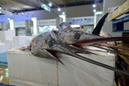 A conservation body has approved a quota to protect the overharvested Mediterranean swordfish