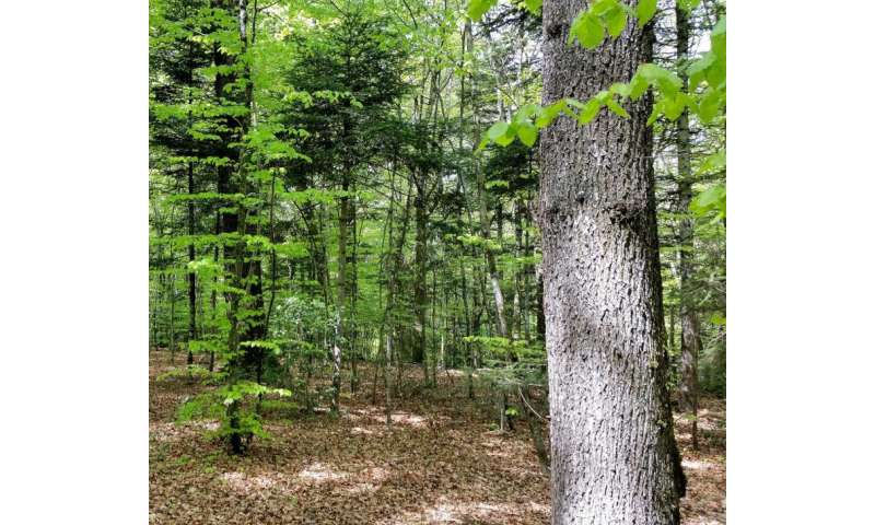 Adapting to climate change – a major challenge for forests