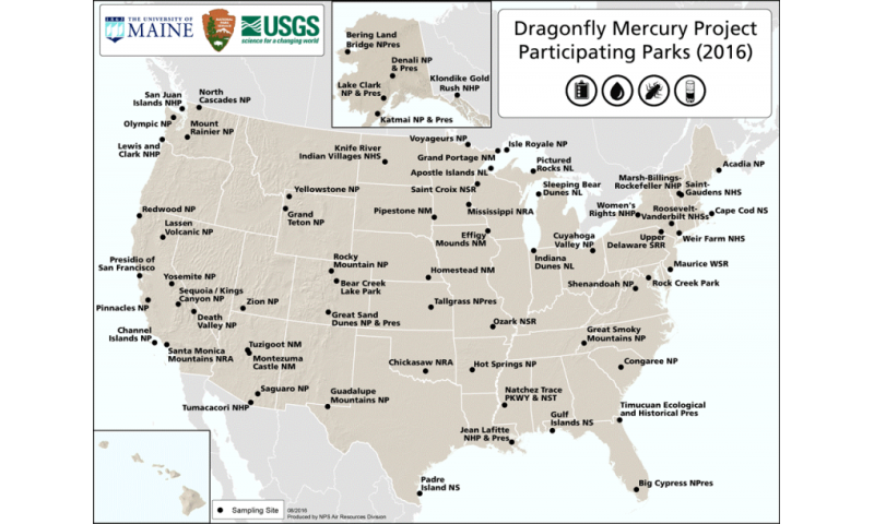 A day in the park–tracking mercury with dragonfly larvae