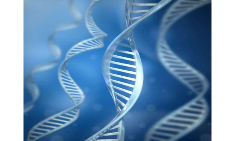 Adiposity genetic risk score tied to cardiometabolic health