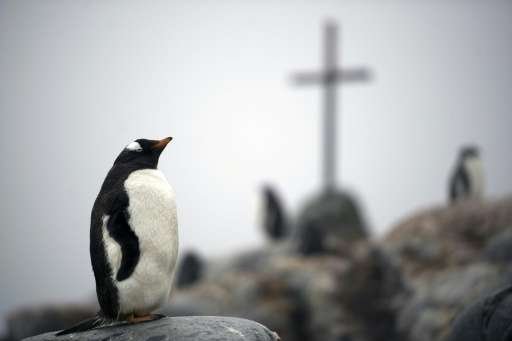 A Gentoo penguin is seen next to a cross that stands as a memorial to three British Antarctic Survey scientists who disappeared