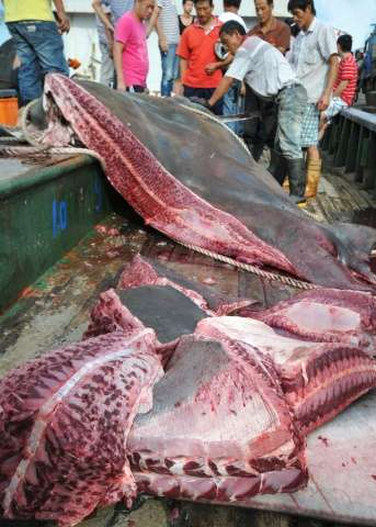 A giant manta ray, caught by a fishermen, is being cut up on a boat in Taizhou, in eastern China's Zhejiang province