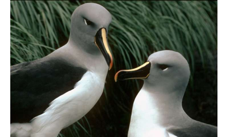 Albatrosses forage in different areas when on migration