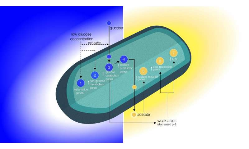 Altered bacterial behavior in space may result from reduced extracellular transport