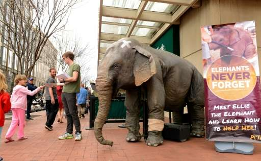 "A man with People for the Ethical Treatment of Animals (PETA) stands next to mechanical elephant ""Ellie"" as he hands o"