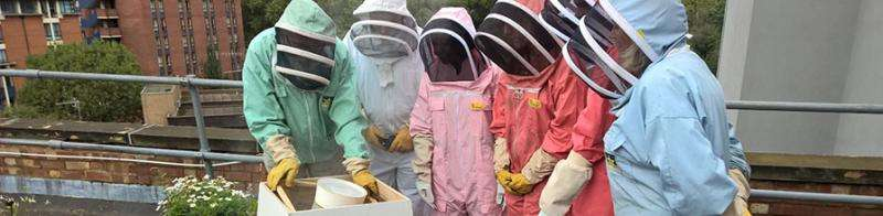 Amateur beekeepers sought to help halt the decline in Britain's bee population