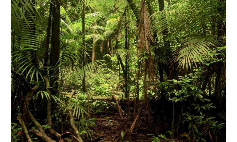 Amazonia's best and worst areas for carbon recovery revealed