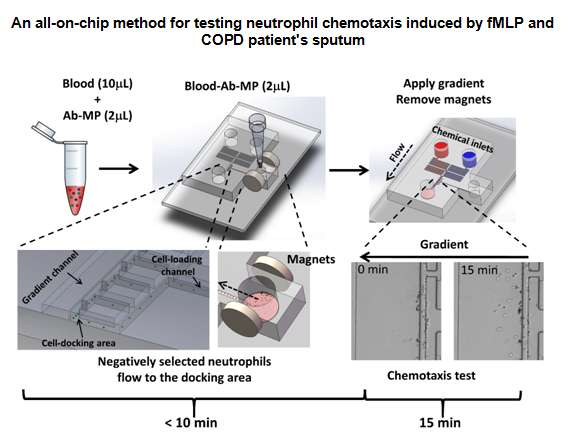 An all-on-chip method for testing neutrophil chemotaxis