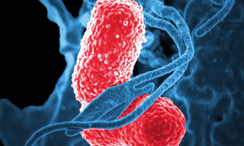 An arms race with a superbug: Study shows how pneumonia-causing bacteria invade the body