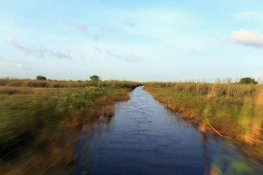 A National Wildlife Refuge in the Florida Everglades