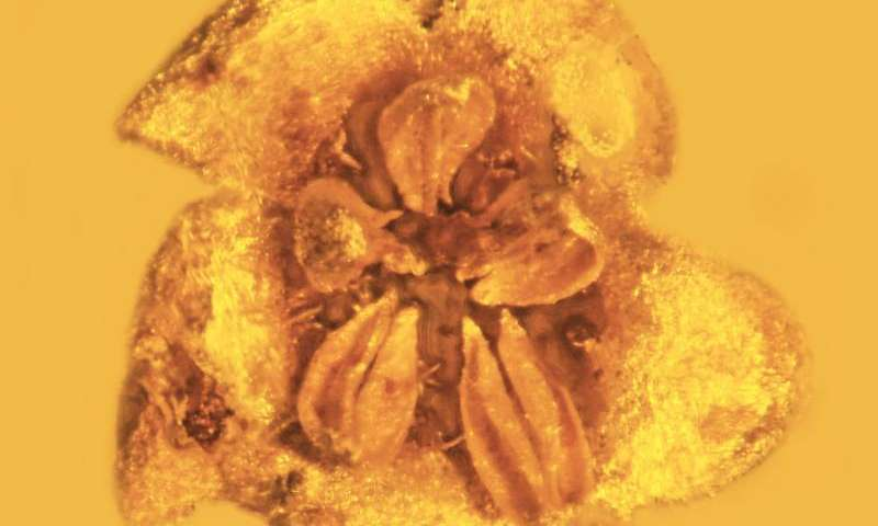 Ancient flowering plant was beautiful -- but probably poisonous