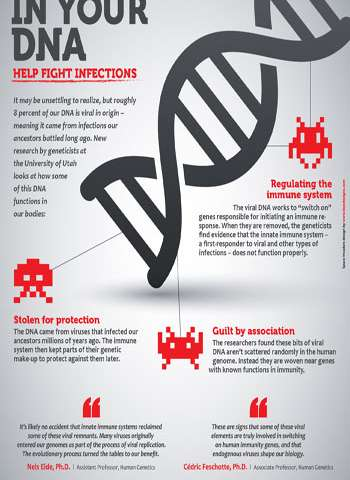 Ancient viral invaders in our DNA help fight today's infections