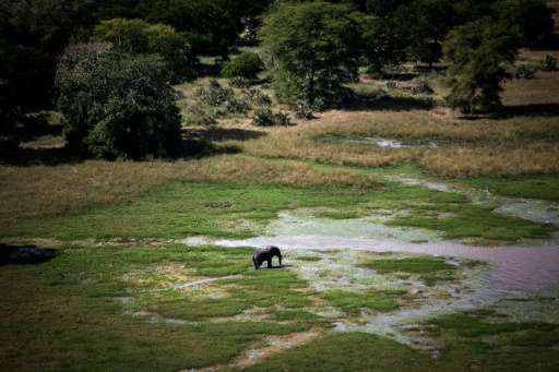 An elephant is pictured at a watering hole in Gorongosa National Park