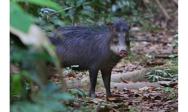 Animal-encounter data under-detects hunted species in Amazon ecosystems