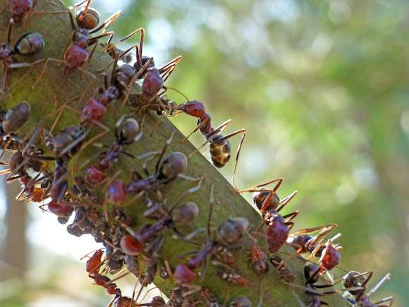 Ant antennae provide vital ID information: study
