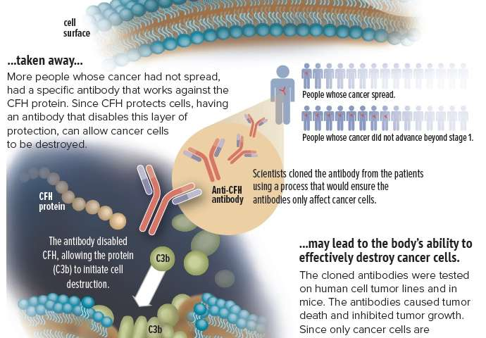 Antibody appears to attack cancer cells, leaving other cells unscathed