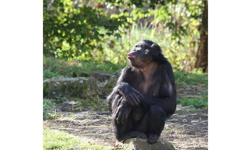 Apes remember their old friends' voices