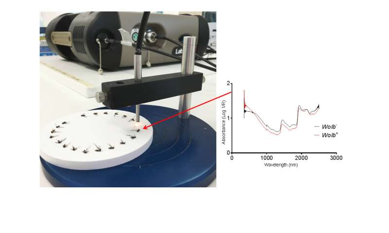A quick and easy new method to detect Wolbachia bacteria in intact Aedes mosquitoes