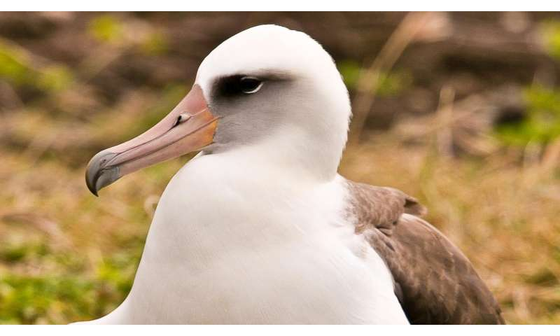 A rare window on the lives of young albatrosses