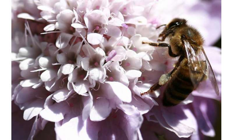 Are plants the puppet masters in the pollination game?