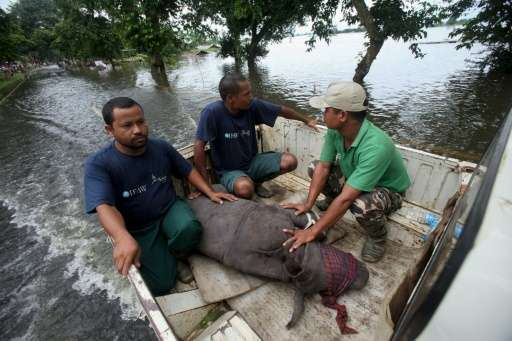 A rhino calf is transported to safety after being rescued by wildlife officials in flood waters in the Kaziranga National Park i