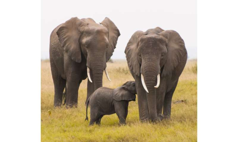 As big animals go extinct, so do the benefits they offer humans, scientists find