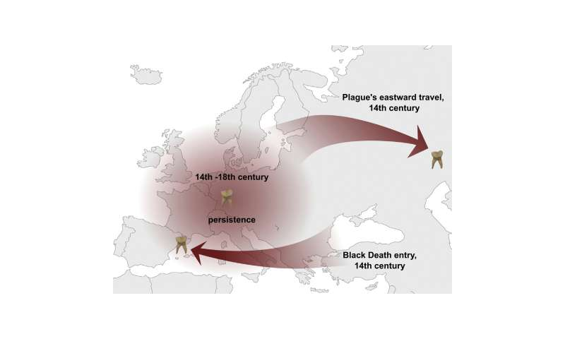 A single strain of plague bacteria sparked multiple historical and modern pandemics