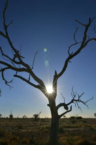 Australia experienced its three warmest springs on record between 2013-15 - spring is the bushfire season when temperature and r