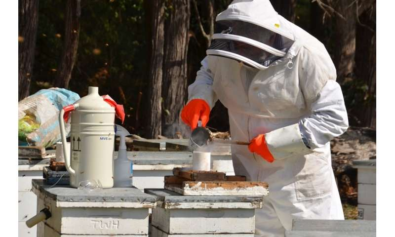 Australian manuka honey a medicinal powerhouse