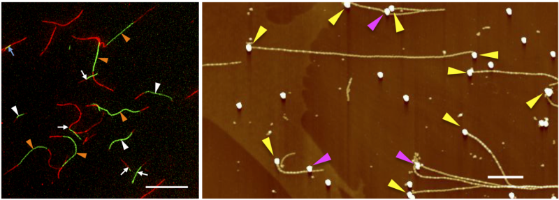 A versatile method to pattern functionalized nanowires
