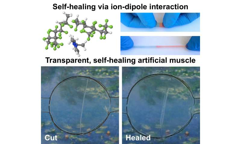 A wolverine inspired material: Self-healing, transparent, highly stretchable material can be electrically activated
