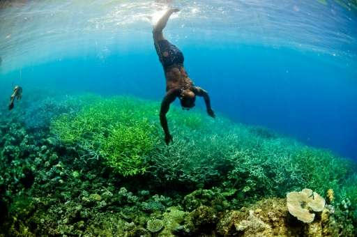 A WWF report warns that the oceans of Melanesia—a vast Pacific swathe comprising Papua New Guinea, the Solomon Islands, New Cale
