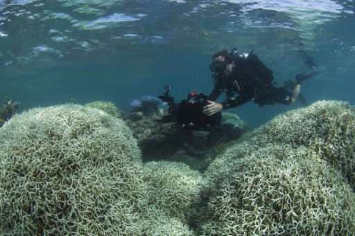 A XL Catlin Seaview Survey diver films bleached coral at Lizard Island on the Great Barrier Reef in March 2016