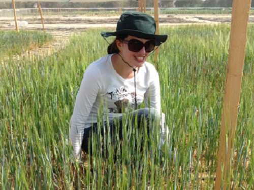 Barley that thrives in salty soils
