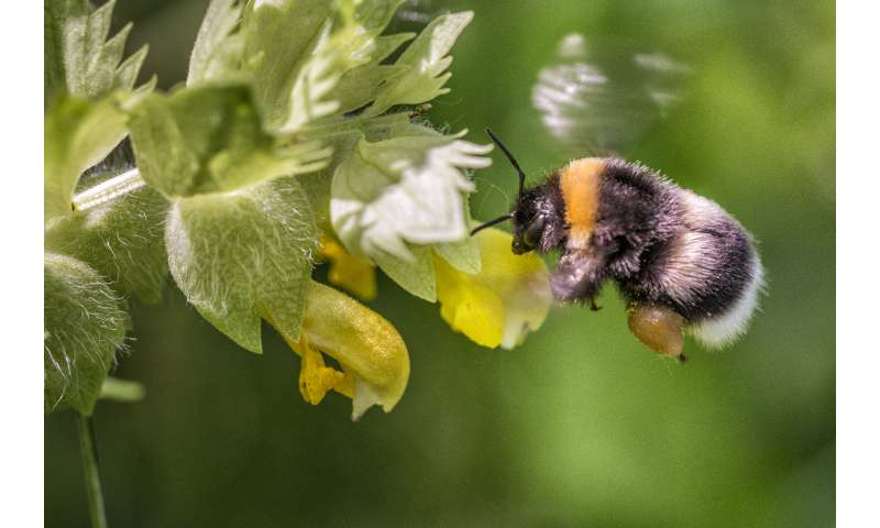 Bees are more productive in the city than in surrounding regions