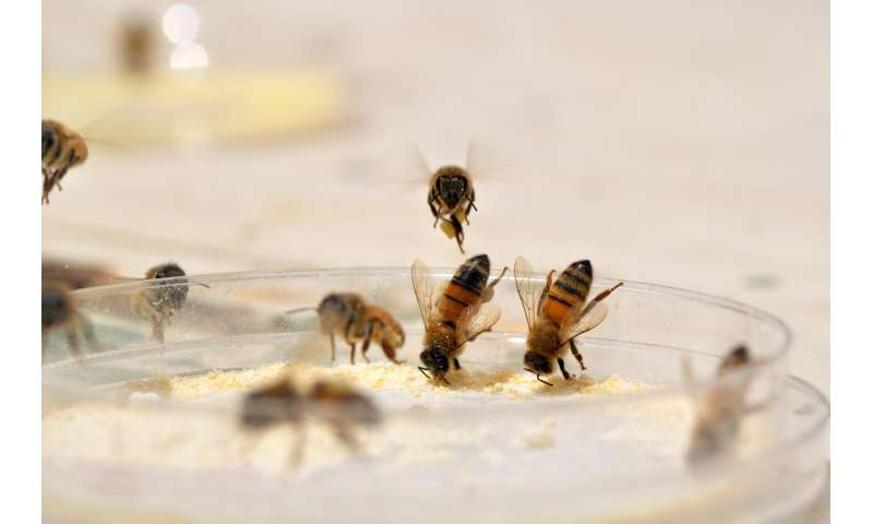 Bees diversify diet to take the sting out of nutritional deficiencies
