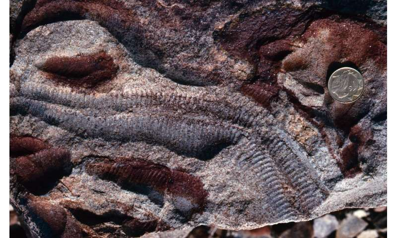 Before animals, evolution waited eons to inhale