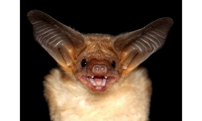 Biggest library of bat sounds compiled
