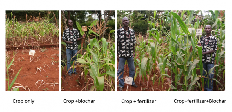 BIOCHAR IMPROVES CROP GROWTH AND CLIMATE