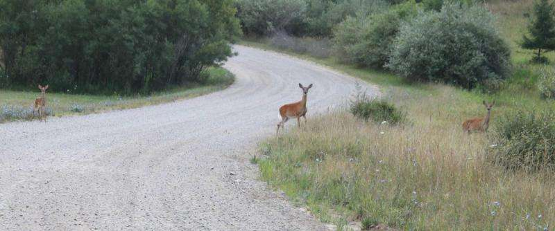 Biologists support Ann Arbor deer cull