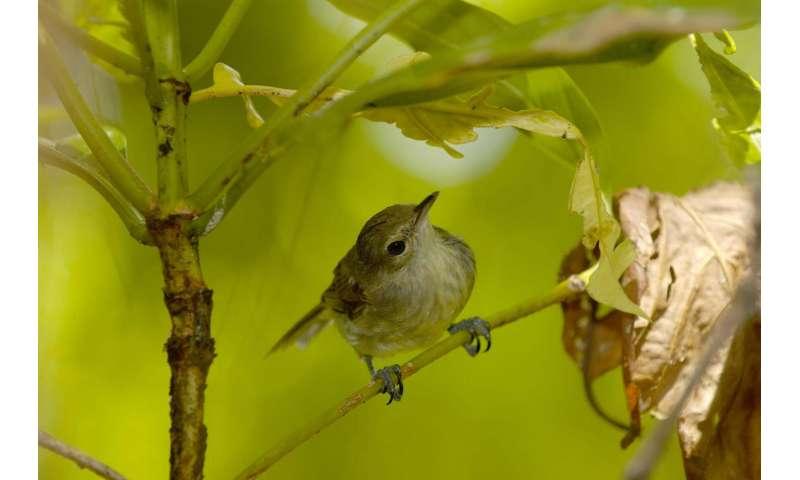 Bird DNA shows inbreeding linked to shorter lifespan