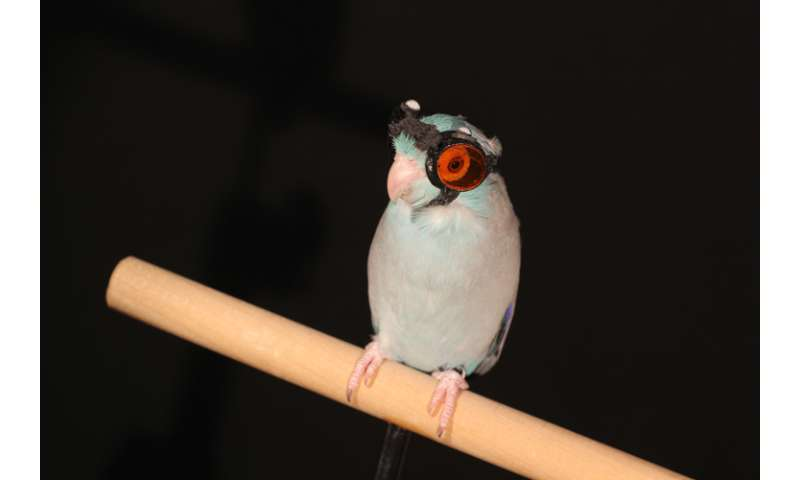 Birds flying through laser light reveal faults in flight research, Stanford study shows
