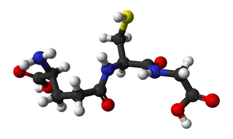 Boosting levels of known antioxidant may help resist age-related decline