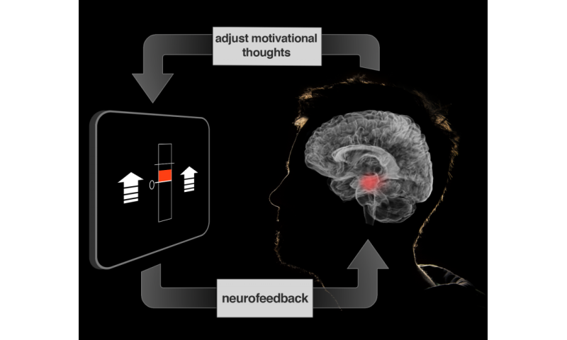 Brain tune-up may aid self-motivation