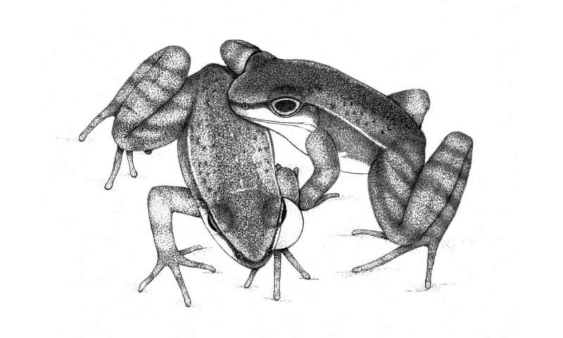 Brazilian torrent frogs communicate using sophisticated audio, visual signals