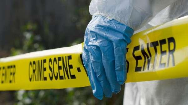 Bugs make ideal crime scene clues