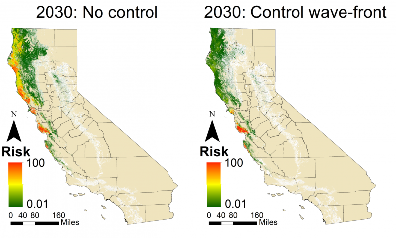 Californian sudden oak death epidemic 'unstoppable,' new epidemics must be managed earlier